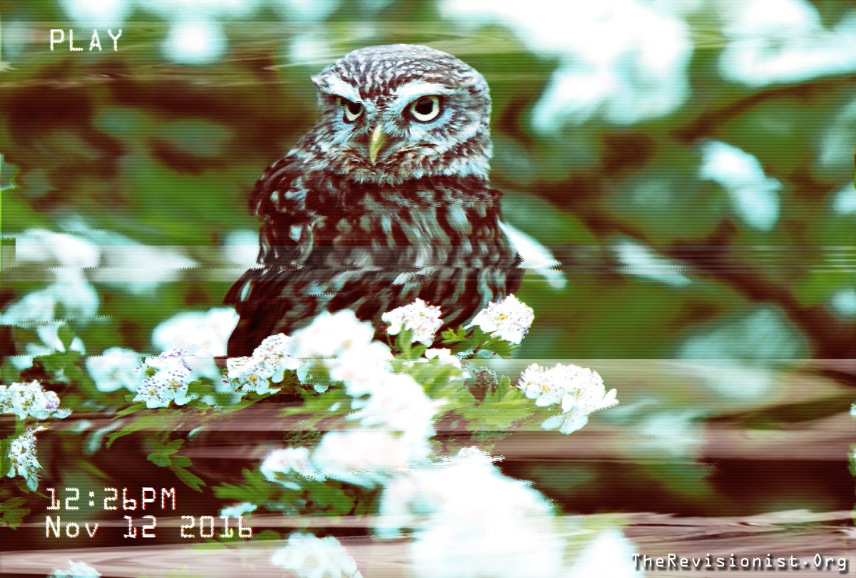 owl_sitting_on_some_white_flowers_natural_portrait_vhs