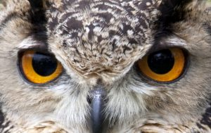 Owl_Eyes_All_About_Sleep:: Sleep homeostatic circadian pressures