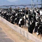 Confined-animal-feeding-operation