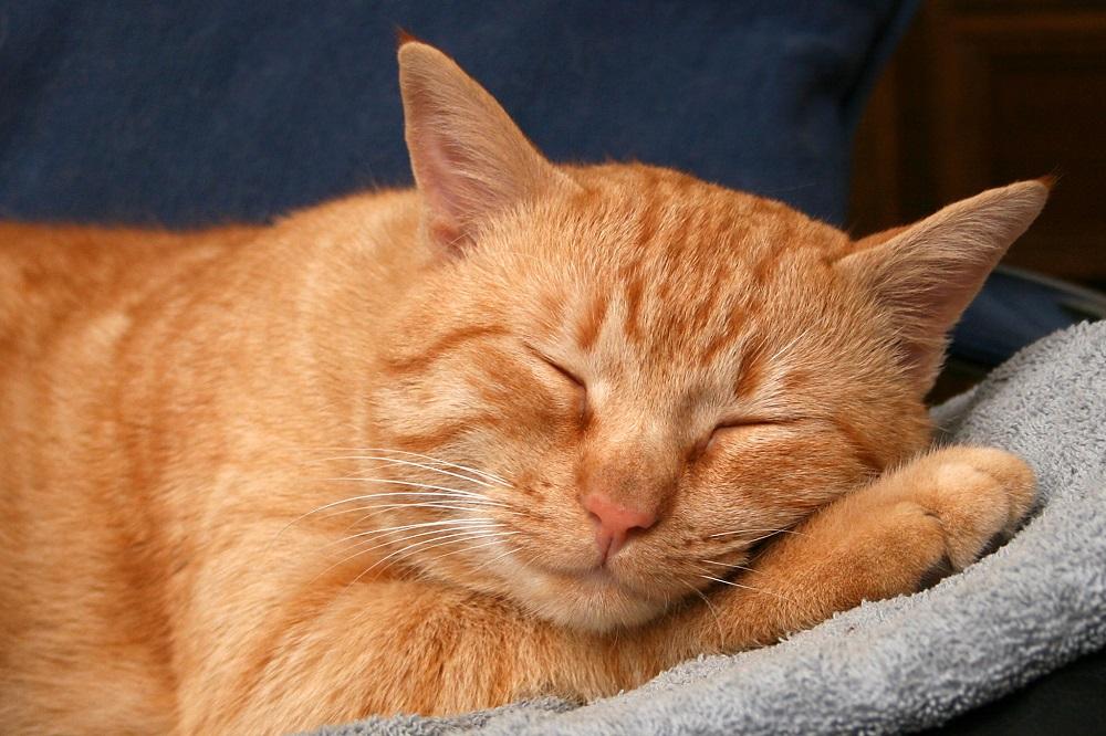 Sleep FAQ: Ideal Sleeping Length & Time, Circadian Rhythm, etc.