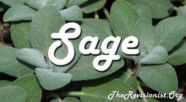 featured image for sage herb, with fluffy white sage leaves close up