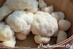 clumps of Lion's Mane in a wooden basket