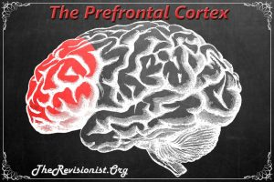 The Role of the Prefrontal Cortex in our Cognitive Function