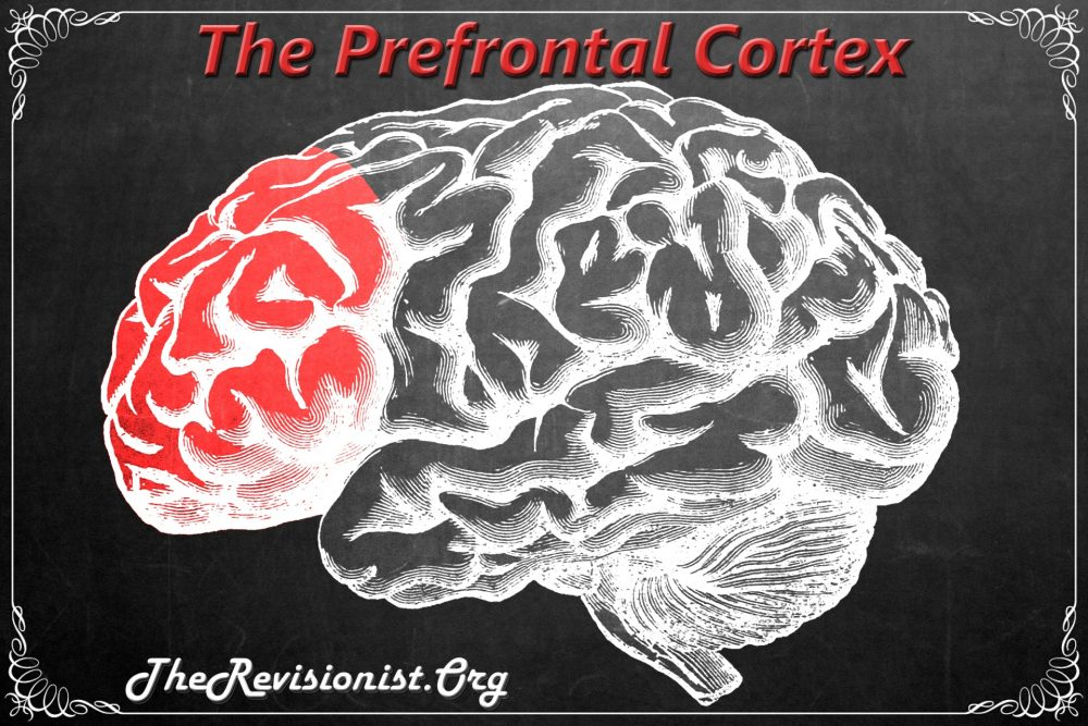 chalkboard diagram of prefrontal cortex region