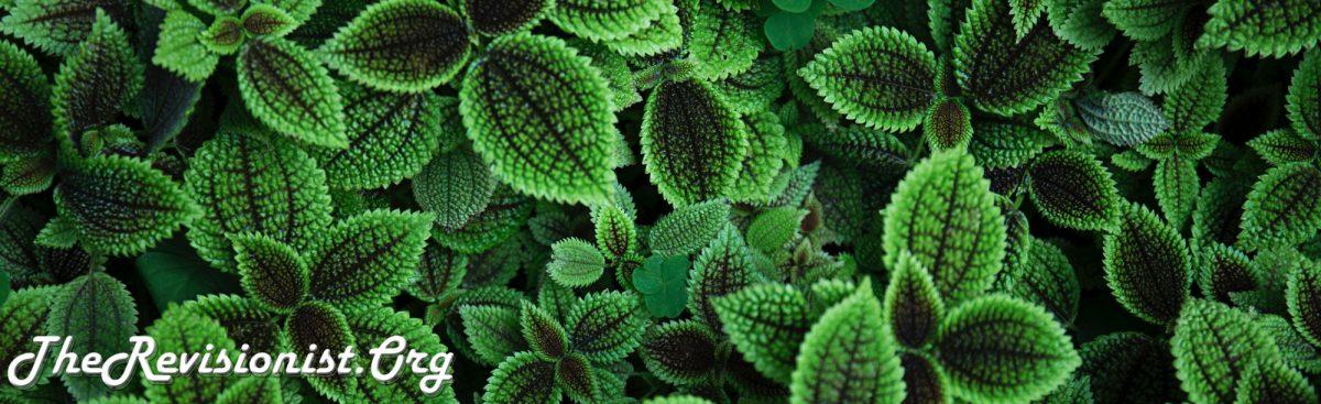 lush green leaves patterns