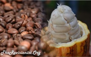 coffee beans cocoa seeds side by side