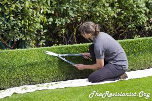 Girl Trimming Hedge Horticulture landscaping